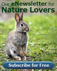 sign up for our enewsletter for nature lovers
